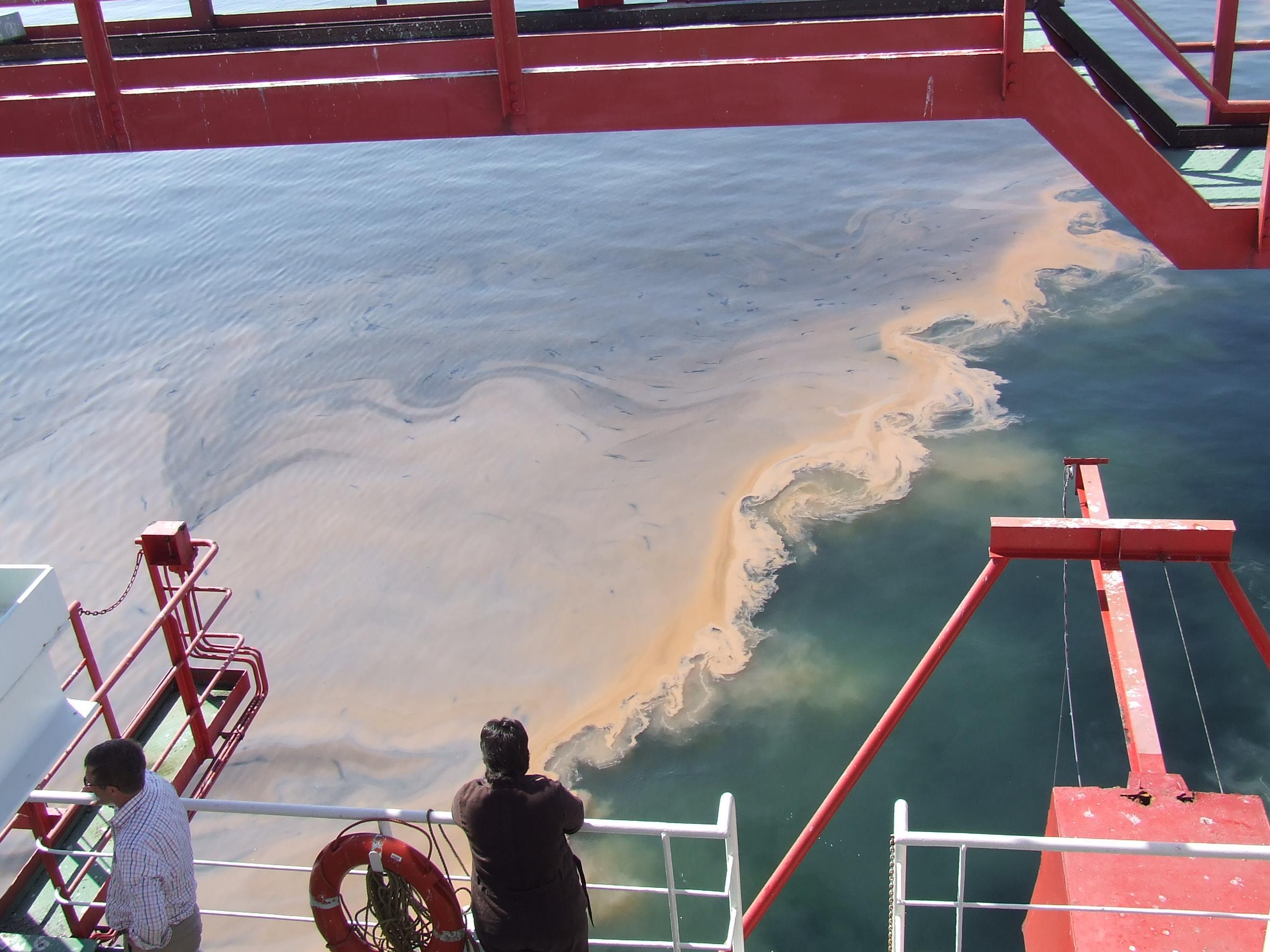 Algen in de Noordzee.